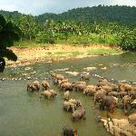 Elephant orphanage (a part of our tour to Kandy with Sandy)