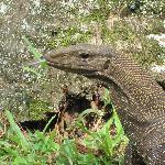 The curious local lizards were fascinating