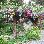 Famous upside down trees filled with flowers