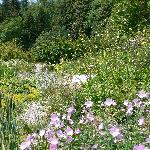 Der wilde Garten von Les Mossettes