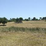 The hay field at front of the house