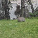 The rabbit outside my window