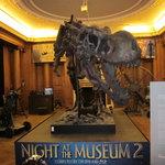 squelette de T-Rex dans la Nuit au Musée 2