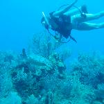 Diving the South Barrier Reef