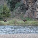 Rare and lucky sighting of a couple of young bears behind the riverside cabins.