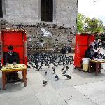 Pigeon feeds vendor