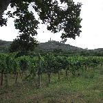Vue sur le vignoble de la Pievuccia e sur il Castillo