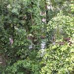 Green Woods-Bethlehem Foto
