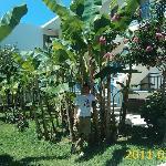 Part of Lintzi's garden