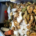 The oysters and clams