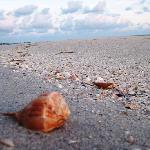 The best shells (beats Sanibel hands down)