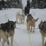 Dog sled care of Arctic Direct
