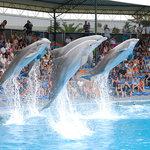 Зоопарк-аквариум Zoomarine Algarve