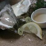 別注の岩牡蠣 ちゃんと鑑札が付いてます