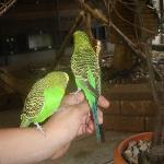 Budgie bog-in feeding aviary.