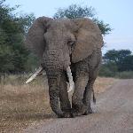 A big elephant :-)
