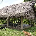 the shady palapa