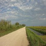 les risières et les pistes cyclables