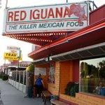 Red Iguana #1