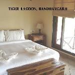 Tiger Lagoon