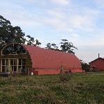 Blue Wren at Pines Pastoral