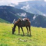 Mountain Meadows of the Taos Ski Valley Trails