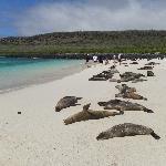 Colonia de lobos marinos en Isla Sta. Fé, Galápagos.