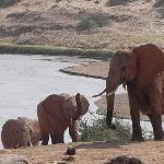 Elephants of Tsavo East