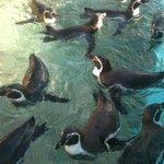 野外コーナーのペンギン