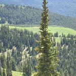 View from chair lift Grand Targhee in summer