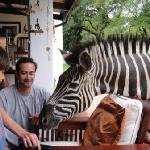 Ophelia the worlds friedliest zebra, wants some cake