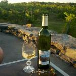 Overlooking the Vineyard