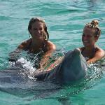 Daughters swam w/ Dolphins & Sharks