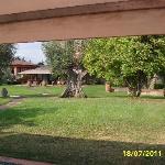 Ulivi secolari nel parco