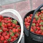 fresh strawberry's