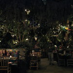 The Rainforest is all around you as you dine.
