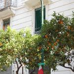 orange and lemon trees everywhere