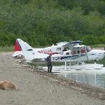 Un orso dorme sulla riva del lago Naknek. Il campeggio è nascosto dagli alberi sullo sfondo