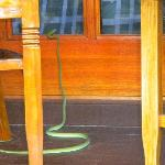 serpente sulla finestra della mia camera