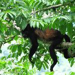 Los monos habitan en los arboles alrededor