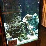 aquarium ...