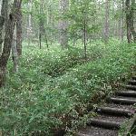 ハイキングコースの路