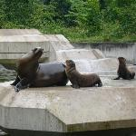 Sea lions and baby sea lions
