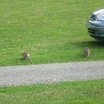 Bunnies at Norton Grange