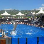 Marineland- dolphins