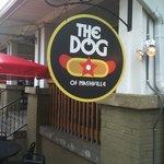 The Dog of Nashville