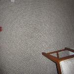 stained, dirty carpet and upholstery