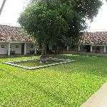 A view of the courtyard with the tamarind trees