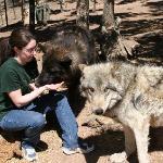 VIP- wolf interaction tour