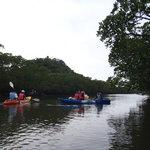 Mangrove canoe & Waterfalls Tour